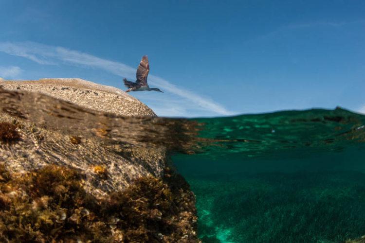 Plage, Lavezzu, archipel, Bonifacio, Corse