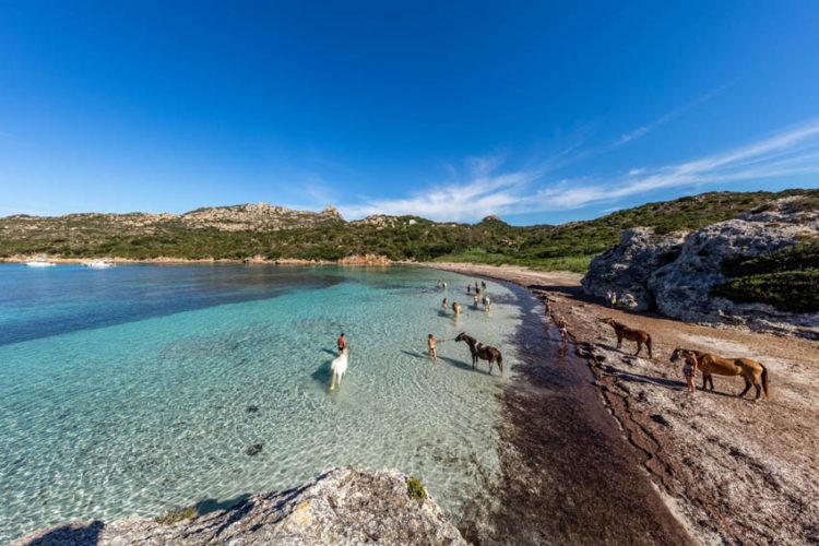 Plage, Paragan, nature, Bonifacio, Corse