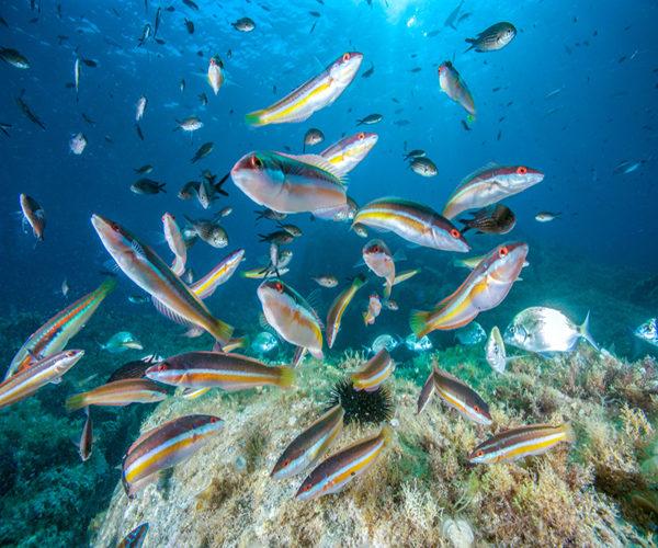 Aquarium-geant-poissons-mer-Bonifacio.jpg