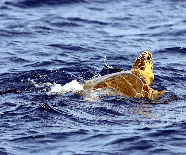 Réserve-Bonifacio-espèce-nature-tortue-Corse.jpg