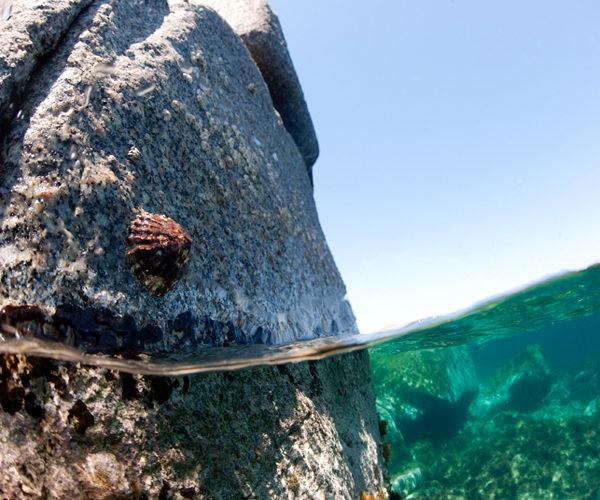 Réserve-Bonifacio-marin-nature-Corse.jpg