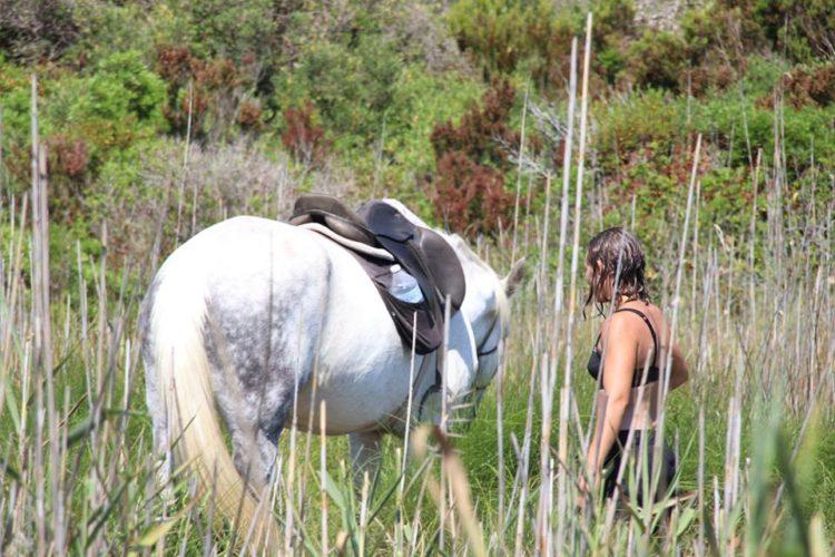 Ranch-sandiego-equestre-sauvages-Bonifacio-Corse.jpg