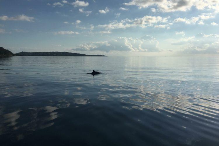 Plongée-nature-acticvités-Corse