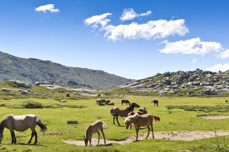 Coscione-plateau-Corsica-nature-sauvage-randonnée-animaux.jpg