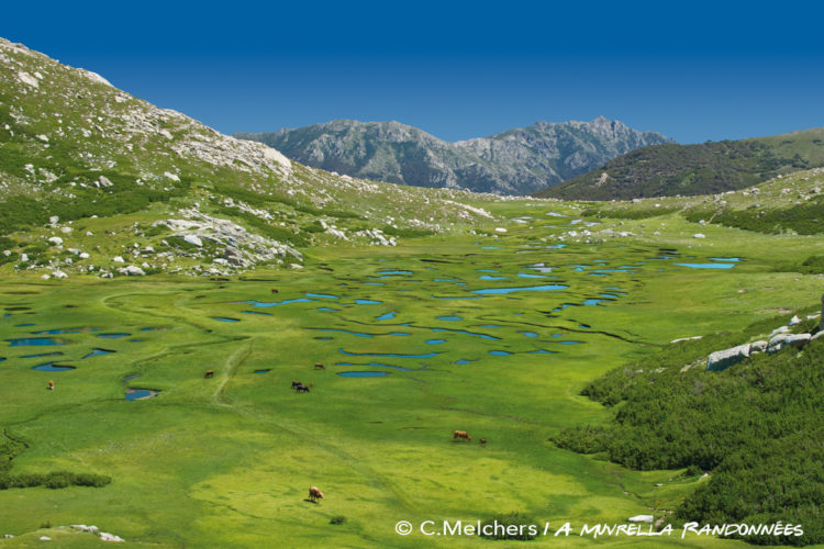 Balade-amuvrella-nature-sudcorse-cors.jpg