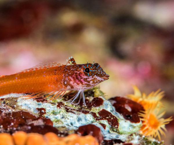 Réserve-Bonifacio-espèce-nature-Corse.jpg