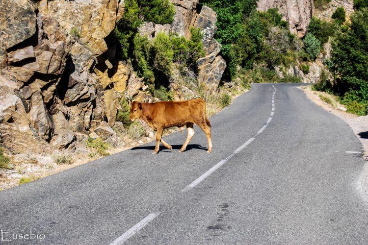 Cédez le passage ! Eusebio Photos