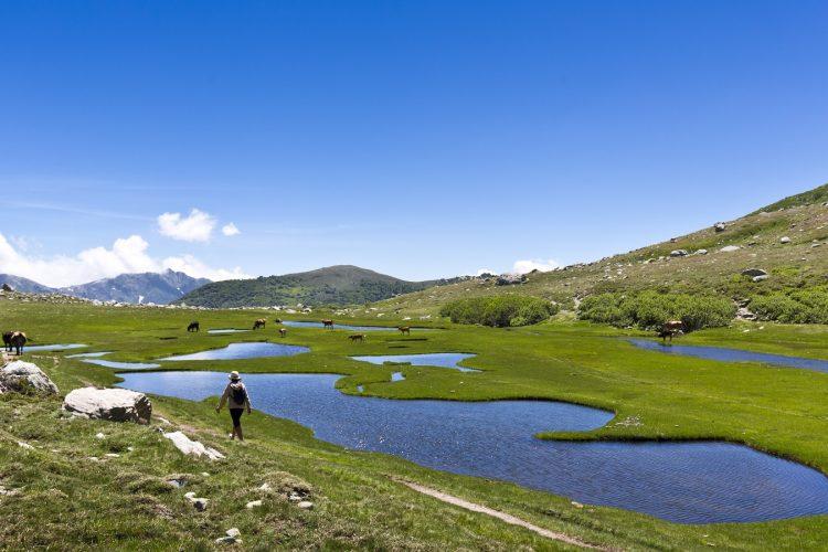 Coscione-plateau-Corsica-nature-sauvage-cochons-randonnée-paysage-animaux.jpg